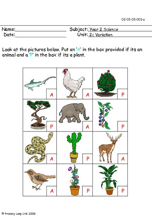 Animal or plant 1