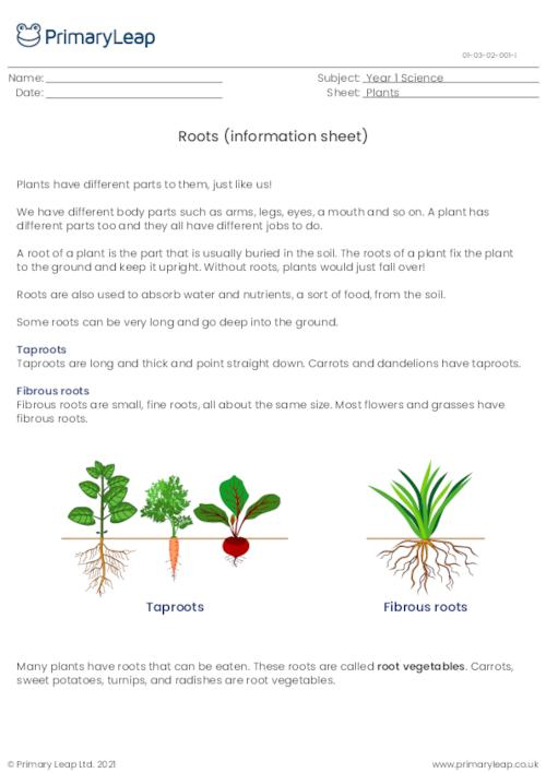 Parts of a plant - roots information sheet