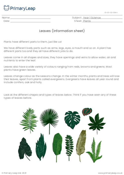 Parts of a plant - Leaves (information sheet)