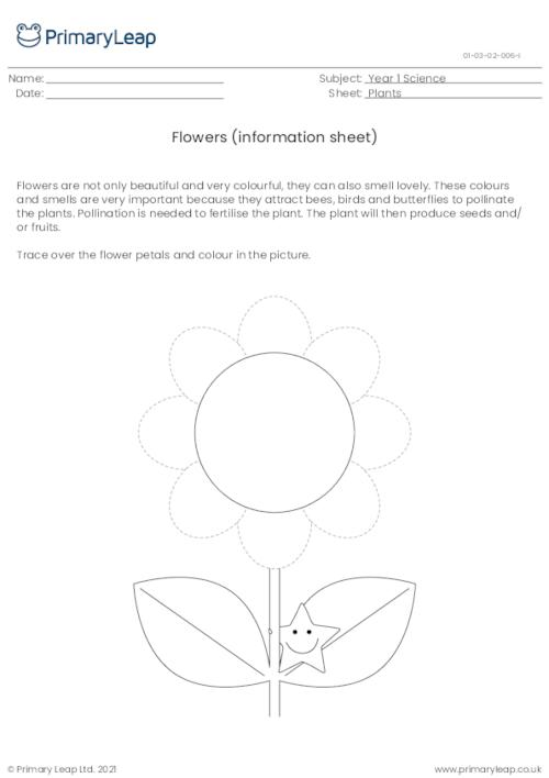 Parts of a plant - flowers information sheet