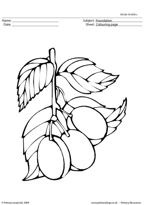 Plums colouring page