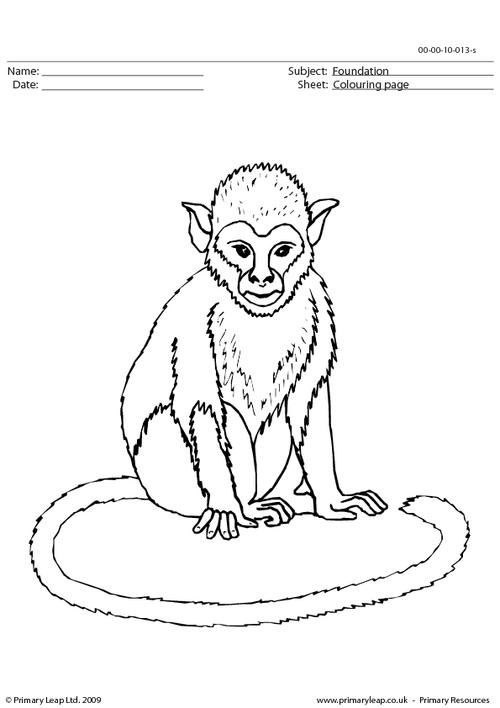 Monkey colouring page