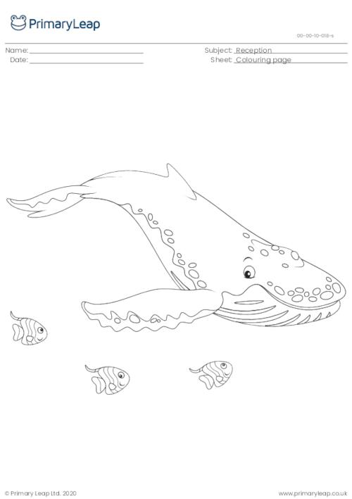 Colouring page - Humpback whale