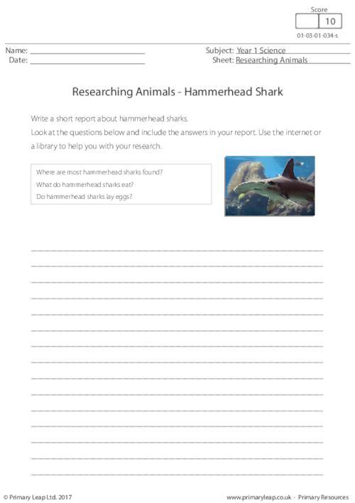Researching Animals - Hammerhead Shark
