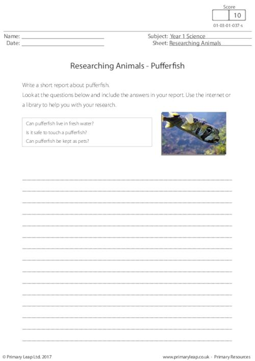 Researching Animals - Pufferfish