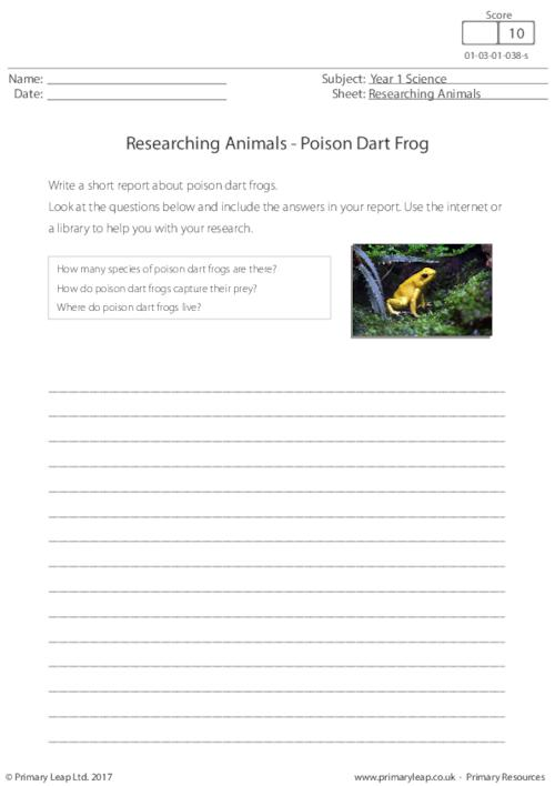 Researching Animals - Poison Dart Frog