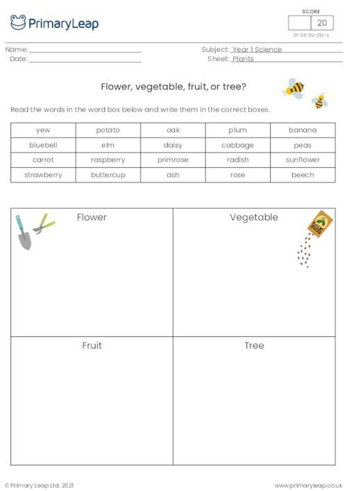 Flower, vegetable, fruit or tree?