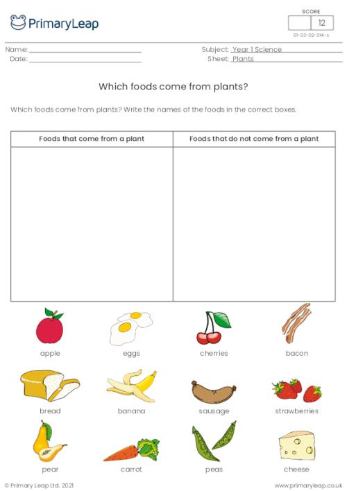 Which Foods Come From Plants?