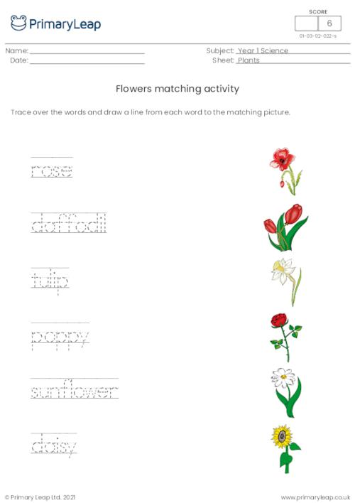 Word and picture matching - Flowers