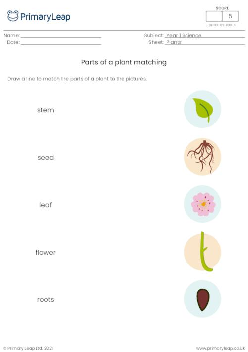 Parts of a plant matching