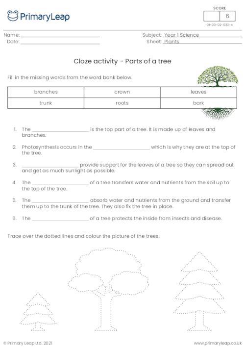 Cloze activity - Parts of a tree