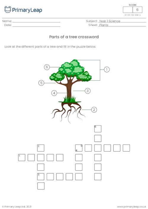 Parts of a tree crossword