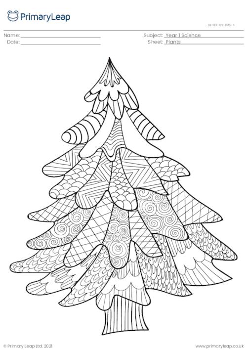 Fir tree colouring page