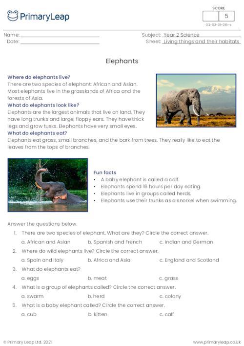 Elephants reading comprehension