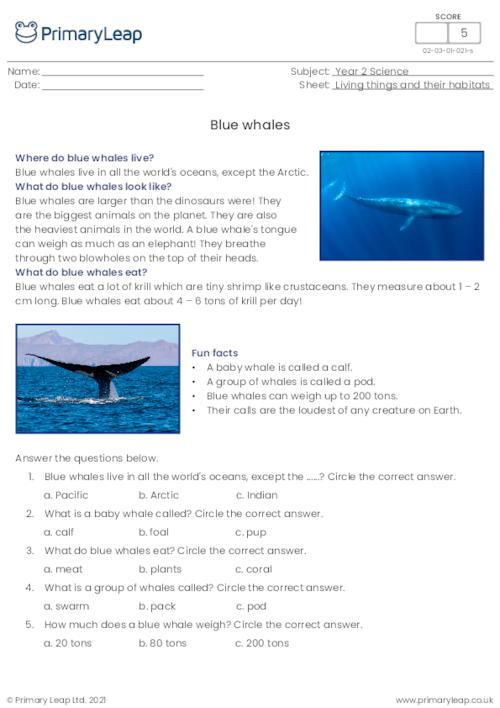 Blue whales comprehension