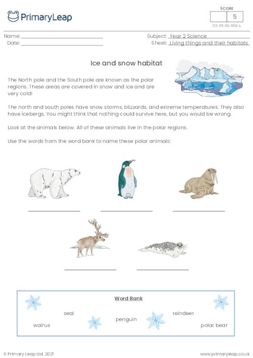Ice and snow habitat