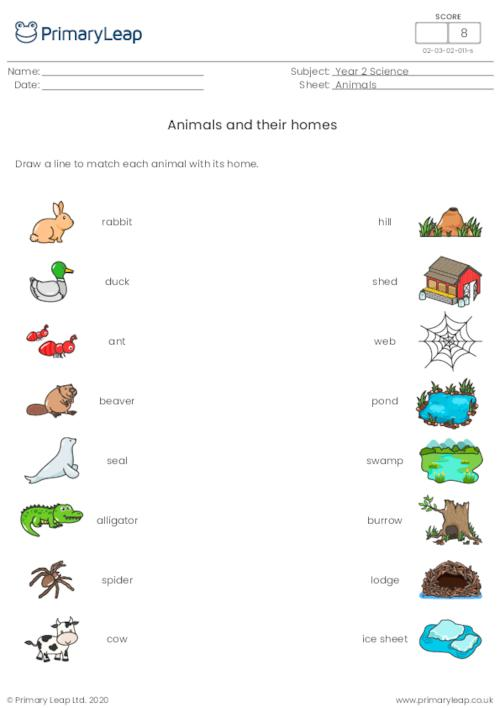 Animals and their homes 1