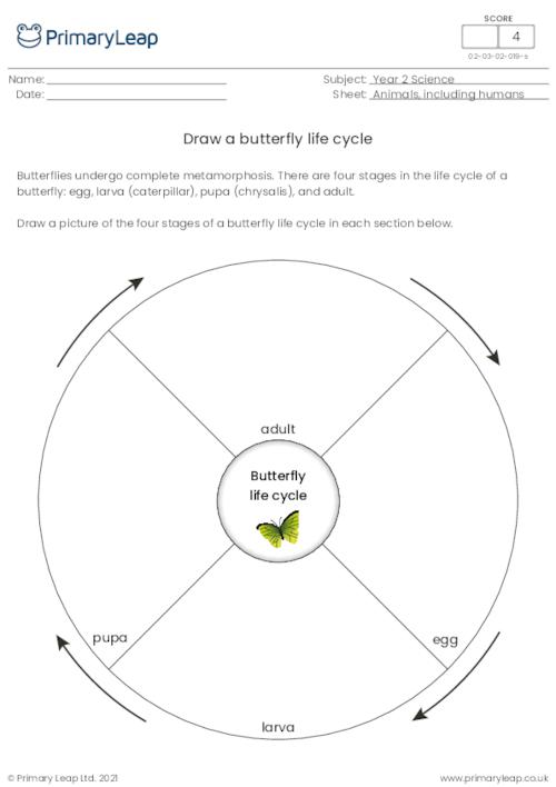 Draw a butterfly life cycle