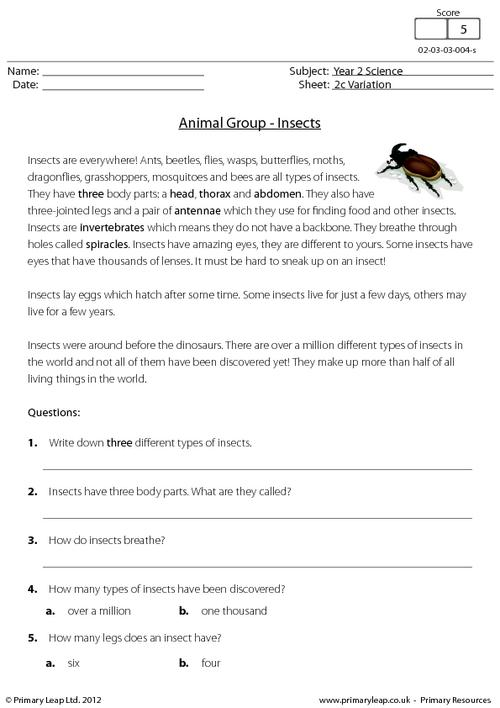 Animal groups - insects