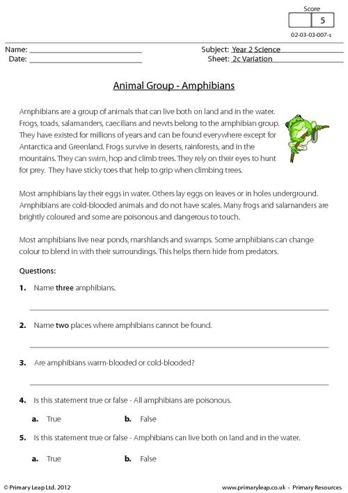 Animal groups - amphibians