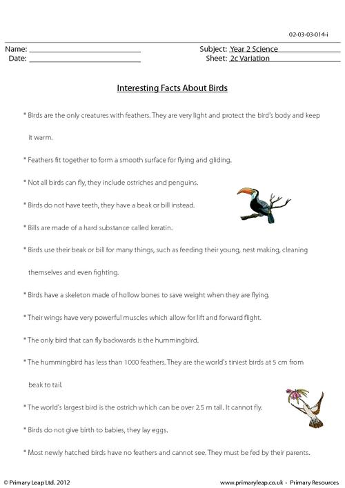 Birds - Fact sheet