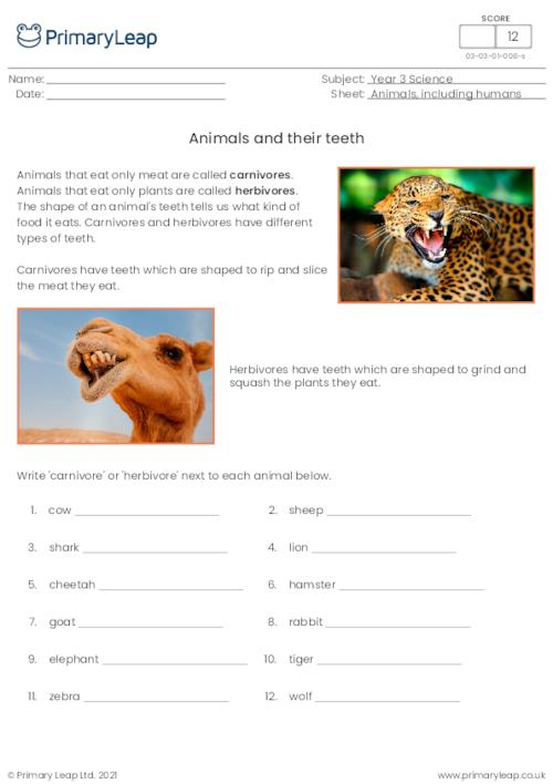 Animals and their teeth