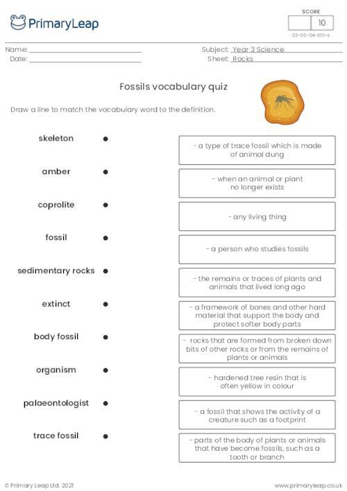 Fossils vocabulary quiz