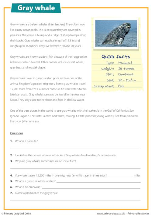 Reading Comprehension - Gray Whale