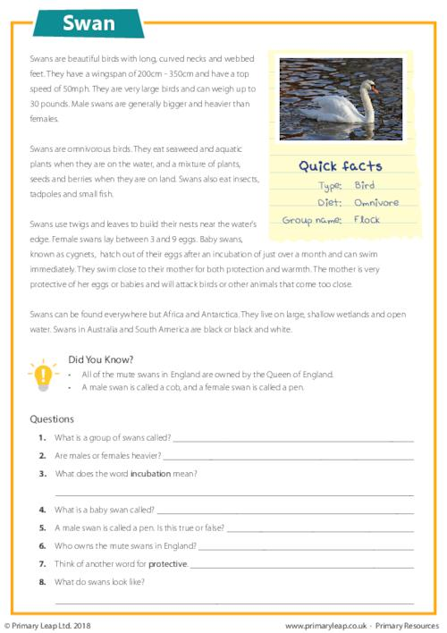 Reading Comprehension -  Swans