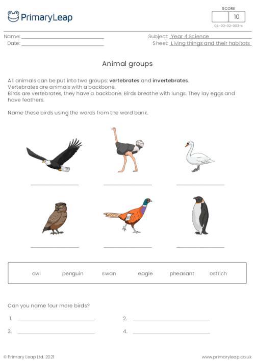 Animal groups 1