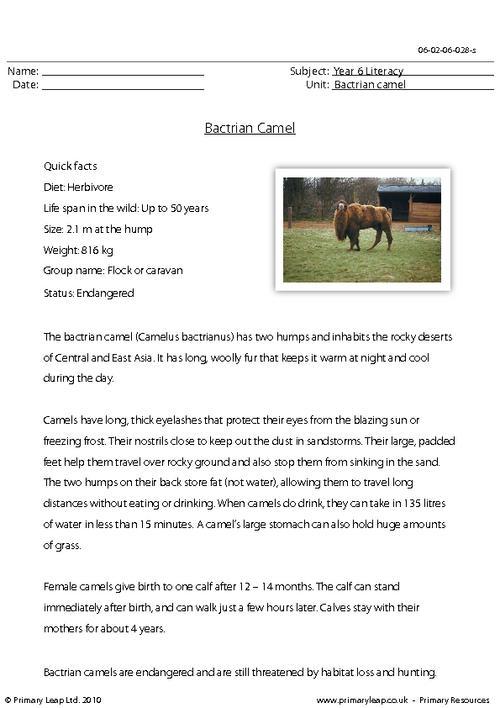 Reading comprehension - Bactrian camel
