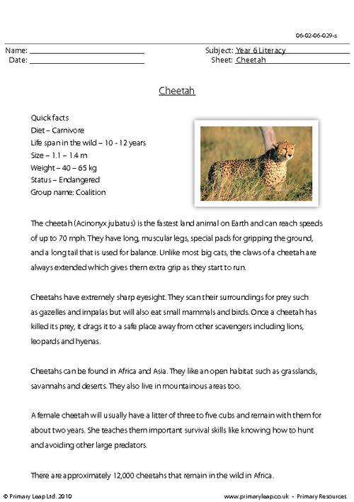 Reading comprehension - Cheetah