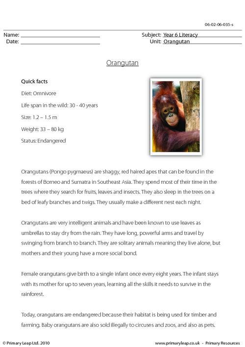 Reading comprehension - Orangutan