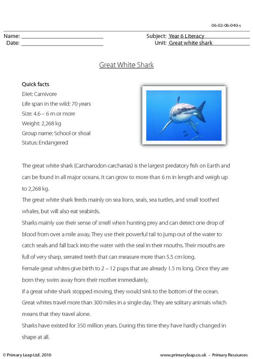 Reading comprehension - Great white shark