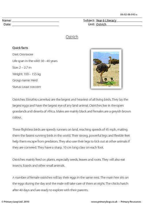 Reading comprehension - Ostrich