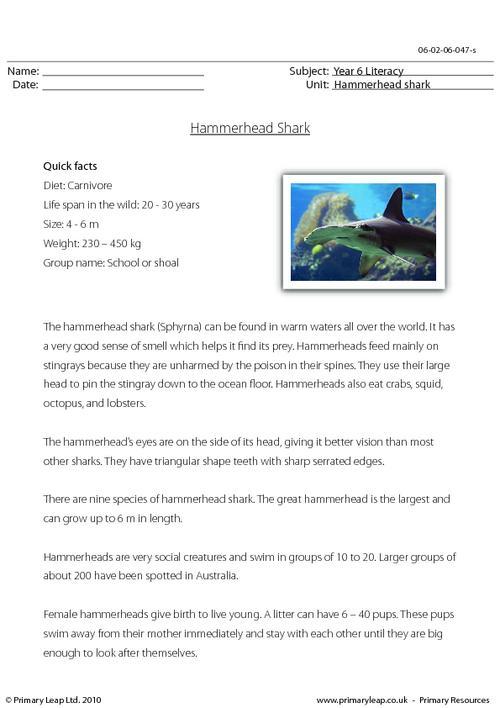 Reading comprehension - Hammerhead shark