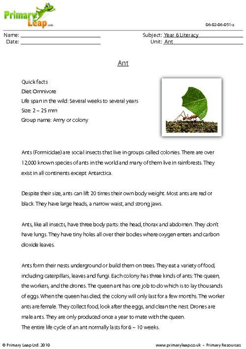 Reading comprehension - Ant