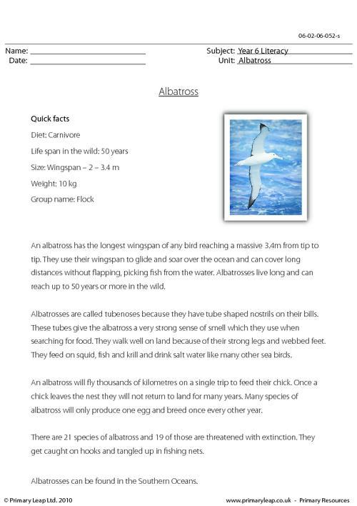 Reading comprehension - Albatross