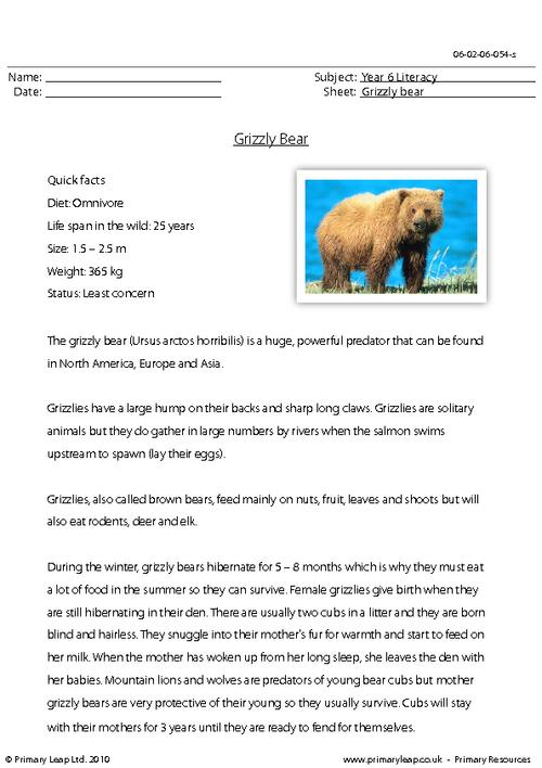 Reading comprehension - Grizzly bear