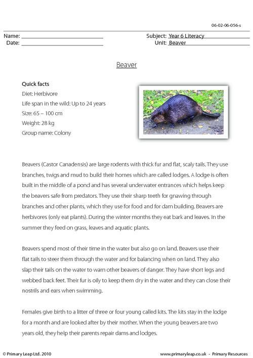 Reading comprehension - Beaver
