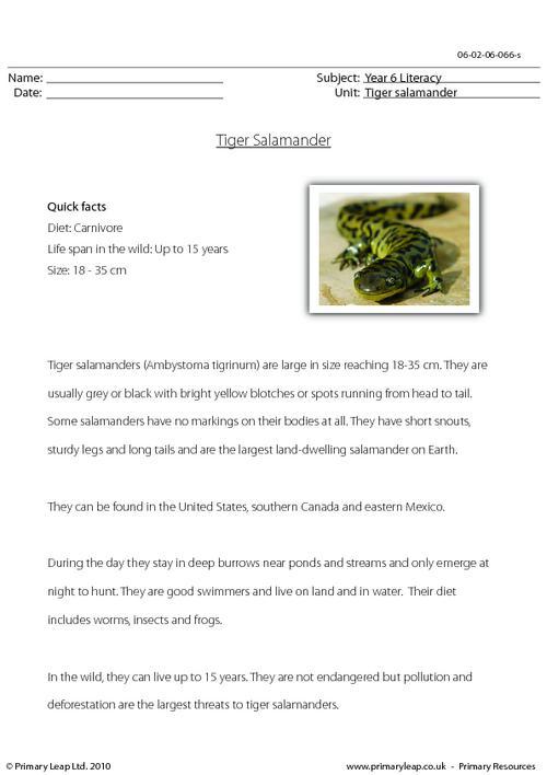 Reading comprehension - Tiger salamander