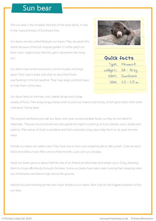 Reading Comprehension - Sun Bear