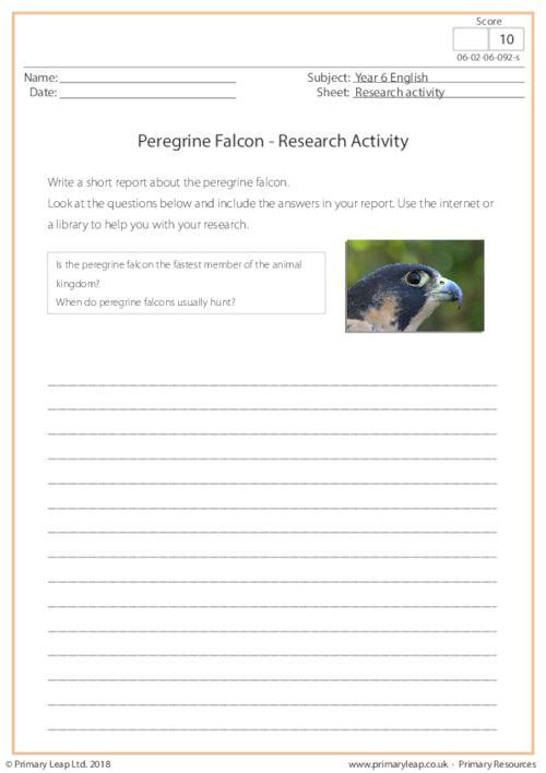 Research Activity - Peregrine Falcon