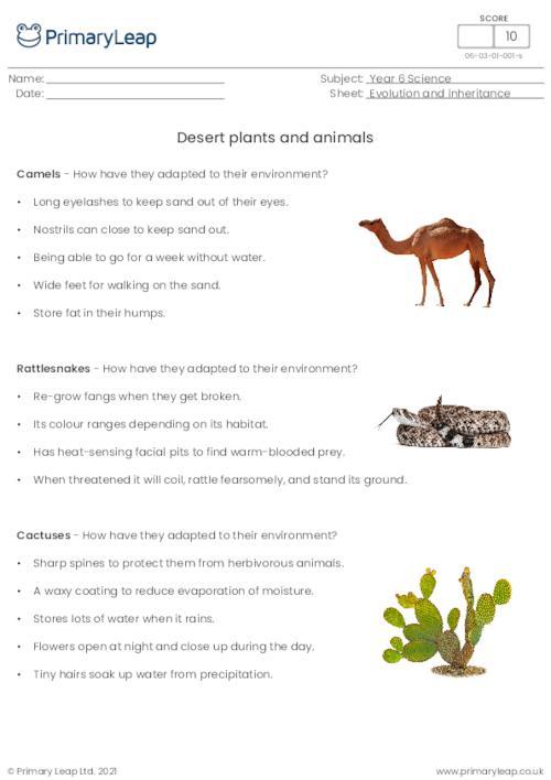 Desert plants and animals