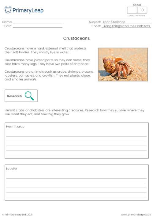 Invertebrates - Crustaceans