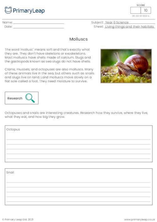 Invertebrates - Molluscs