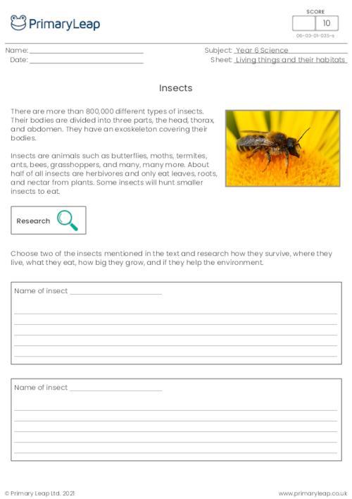 Invertebrates - Insects