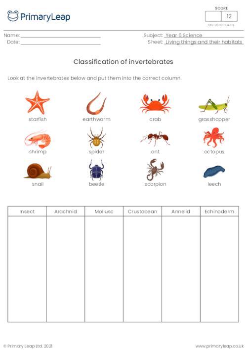 Classification of animals - Invertebrates