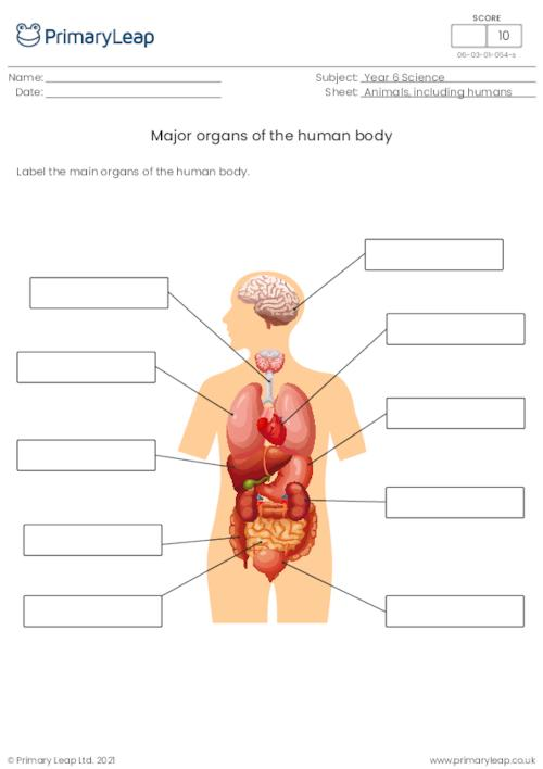Label the organs of the human body