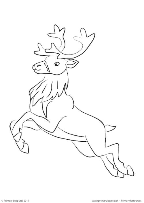 Colouring Picture - Reindeer